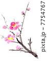 梅花 梅の花 梅のイラスト 7754767
