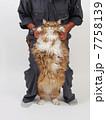 立った大きな猫 7758139