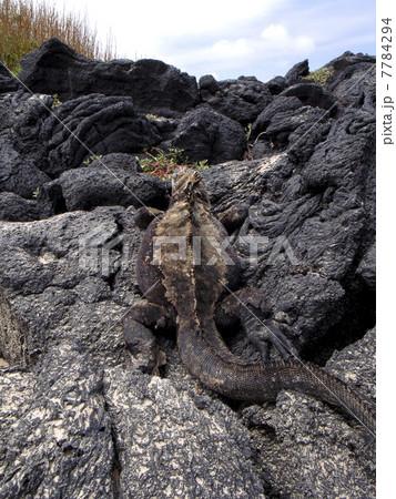 ガラパゴス諸島 7784294