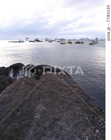 ガラパゴス諸島 7784295