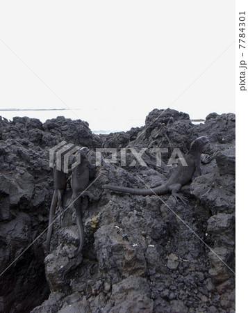 ガラパゴス諸島 7784301