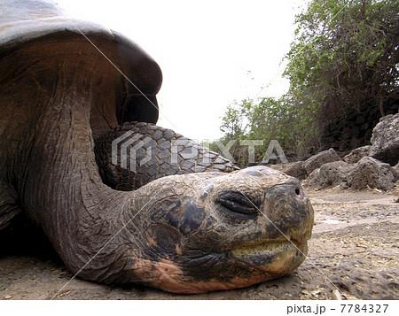 ガラパゴス諸島 7784327