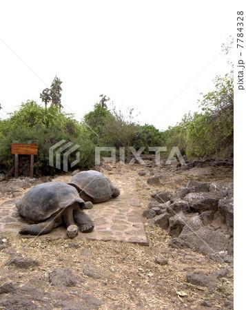 ガラパゴス諸島 7784328