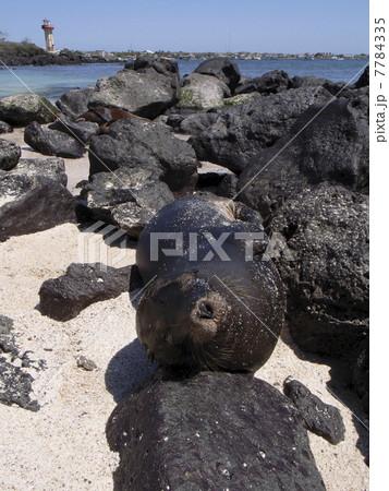 ガラパゴス諸島 7784335