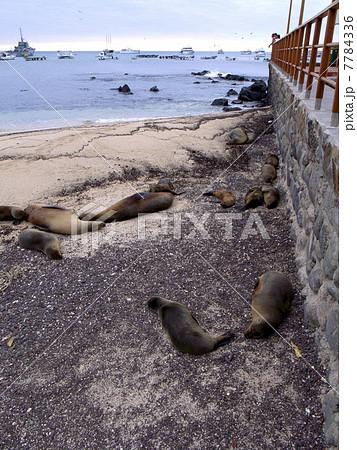 ガラパゴス諸島 7784336
