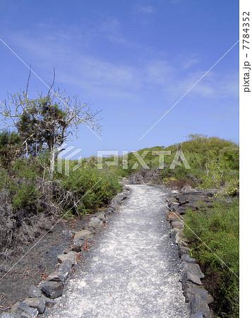 ガラパゴス諸島 7784352