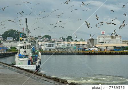 八戸散歩・鮫漁港 7789576