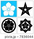 桔梗紋 7836044