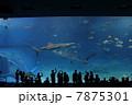 美ら海水族館 7875301
