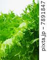 みずみずしい新鮮フリルレタス 7891847