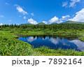 八甲田連峰と睡蓮沼 夏 7892164