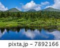 夏の八甲田 睡蓮沼 7892166