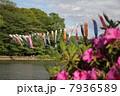 こどもの日 善福寺公園 池の写真 7936589