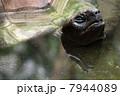 象亀 かめ カメの写真 7944089
