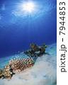 サンゴ 海中 水中の写真 7944853