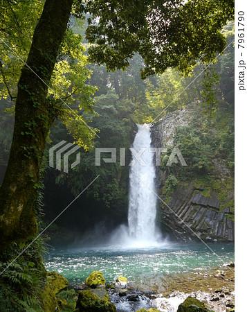 浄蓮の滝 7961790