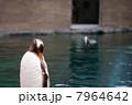 ペンギン 7964642