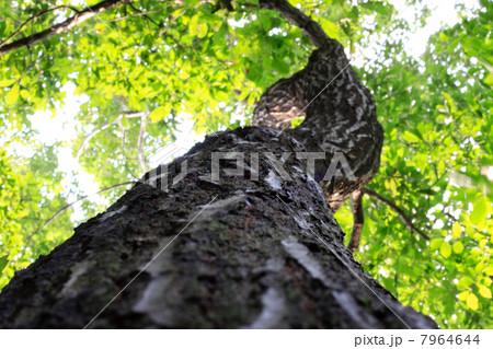 木の幹 7964644