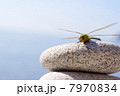 Dragonfly & stones 7970834