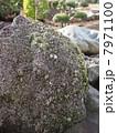 庭石 岩石 石の写真 7971100