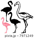 flamingo bird vector outline and silhouette 7971249