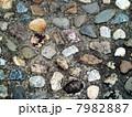 石ころ色々 7982887