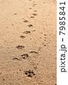 浜辺の足跡 7985841