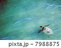 ウミガメ 7988875