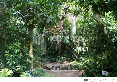 熱帯雨林 7991117