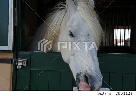 馬 7991123
