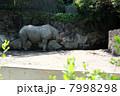 クロサイ ヒガシクロサイ 動物の写真 7998298
