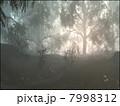 霧雨の森 7998312