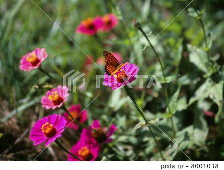 ウラシマの花 8001038