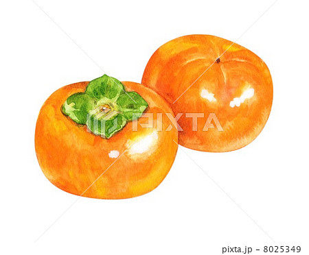 秋の味覚 柿 8025349