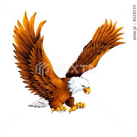 白頭鷲 8028535