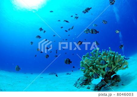 サンゴと小魚 8046003