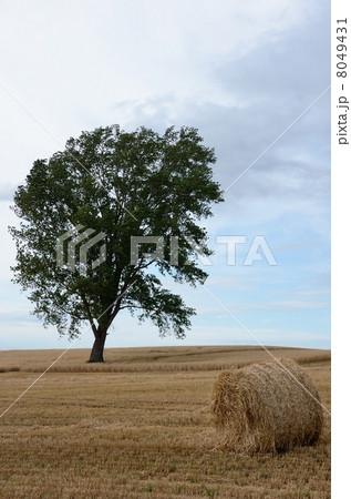 麦稈ロールと哲学の木 8049431
