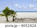 砂浜に生えるヤシ 8052828