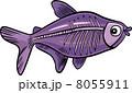 サカナ 魚 魚類のイラスト 8055911