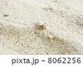 ヤドカリ 8062256