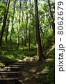 山林 木々 樹木の写真 8062679