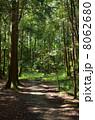 山林 樹木 木々の写真 8062680