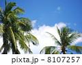椰子 ヤシの木 植物 椰子の木 ココヤシ 南国 南国イメージ 南の島 青空 木 自然 真夏 リゾート ポリネシア ハワイ バリ島 インドネシア 東南アジア 海外 アジアンリゾート 葉 緑の葉 バリ バ 8107257