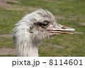 自然 動物 生き物の写真 8114601