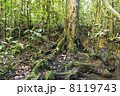 Rainforest tree with mossy roots at the edge of a rainforest pool, Ecuador 8119743