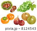 秋の味覚 果物 果実のイラスト 8124543