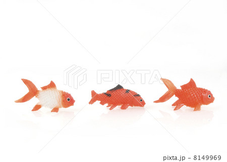Three goldfishesの写真素材 [8149969] - PIXTA