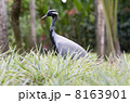 鳥類 動物 アフリカ大陸の写真 8163901