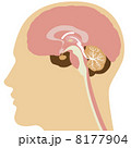 脳 8177904