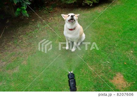 ミストシャワーを浴びる犬 8207606